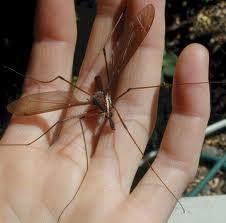¿Y si eliminamos todos los mosquitos? cinco consecuencias